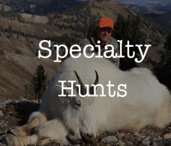 specialty hunts
